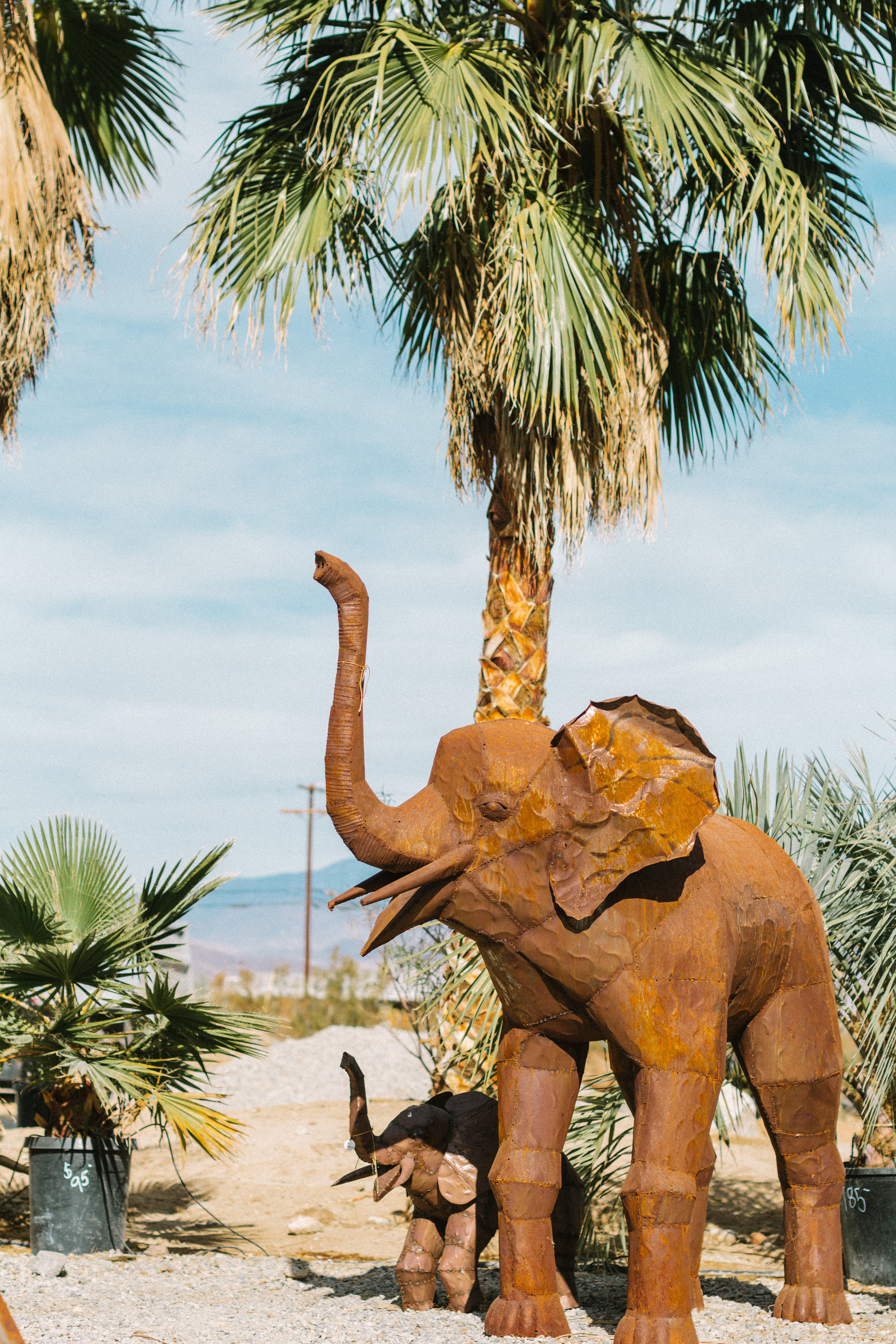 things to do borrego springs 6