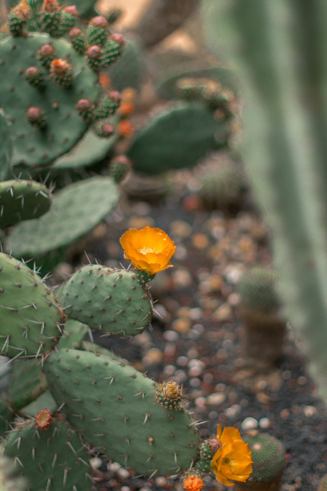 la arboretum cactus