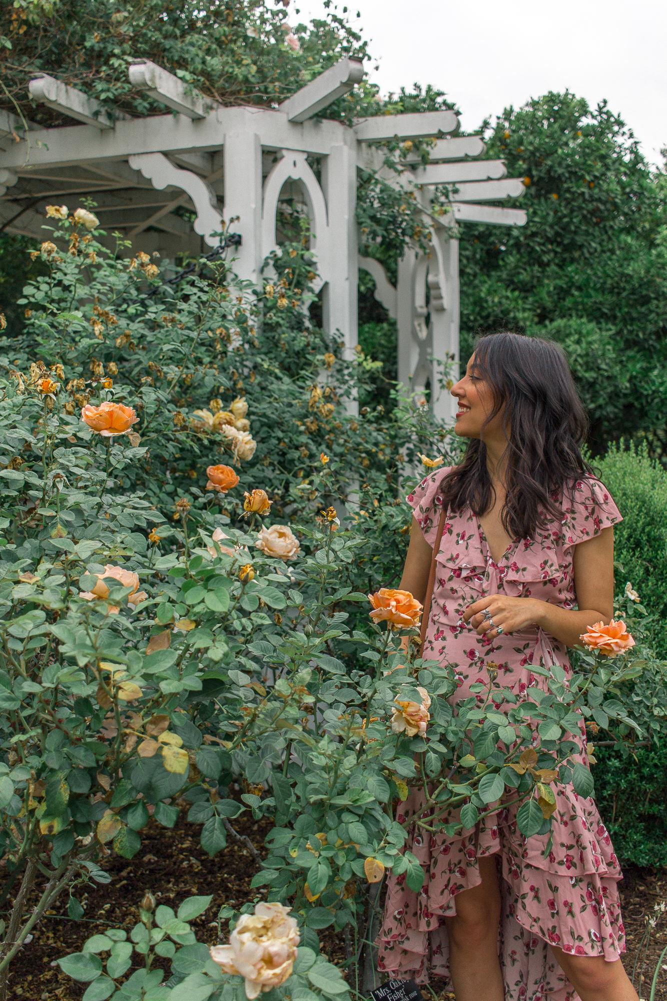 la arboretum rose garden 20