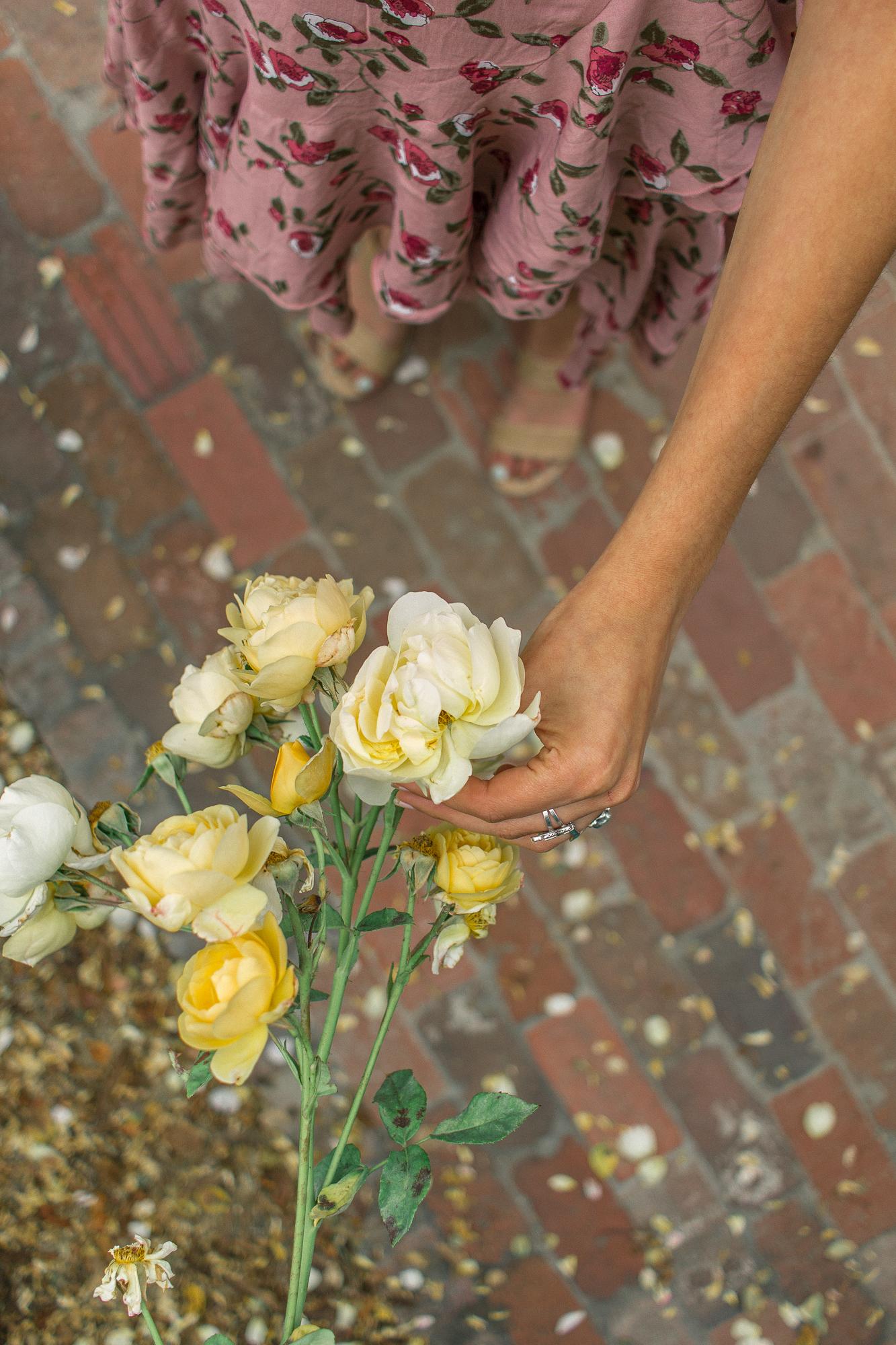 la arboretum rose garden 22