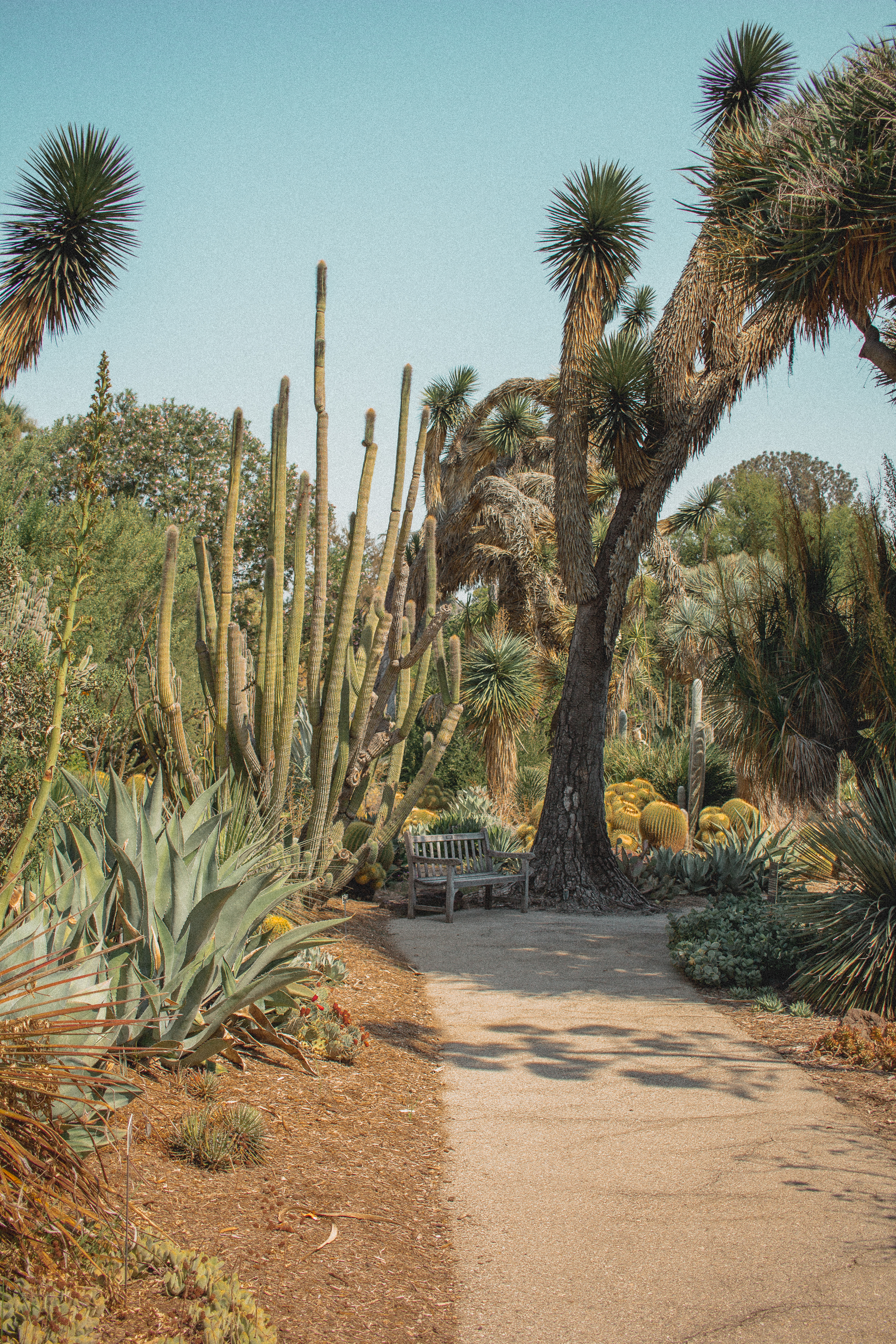 huntington library desert garden 3