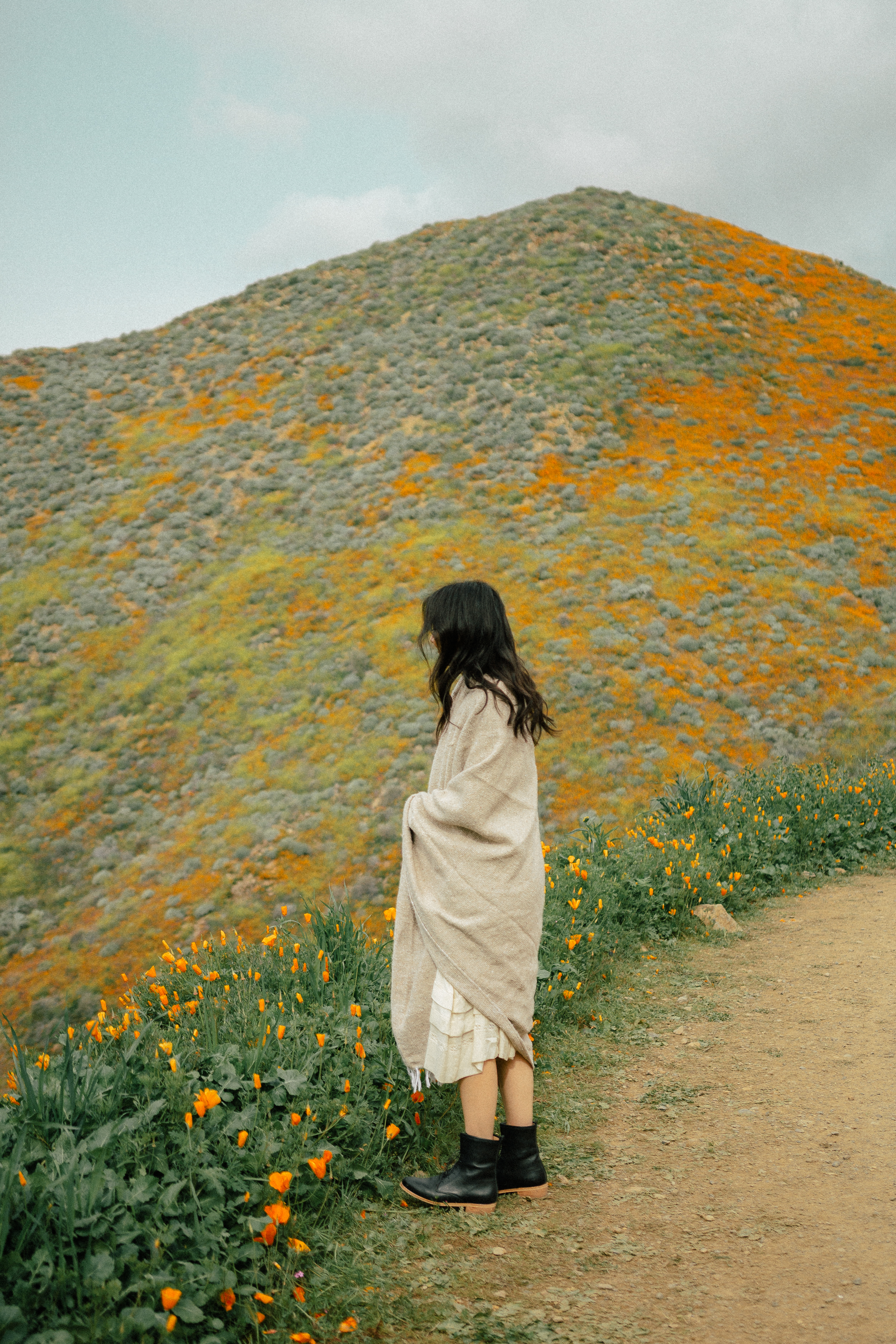 poppy fields california superbloom 5