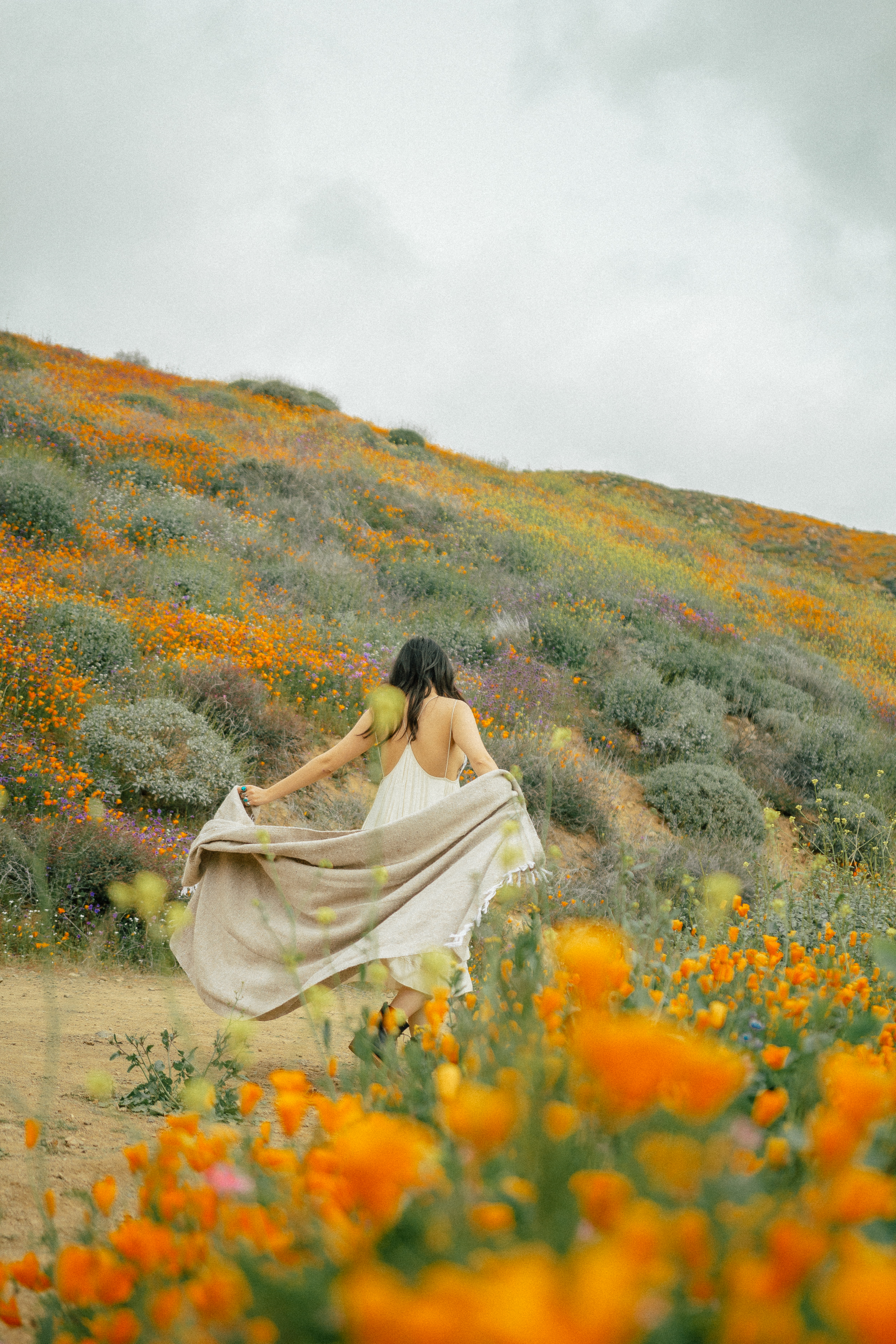 poppy fields california superbloom 15