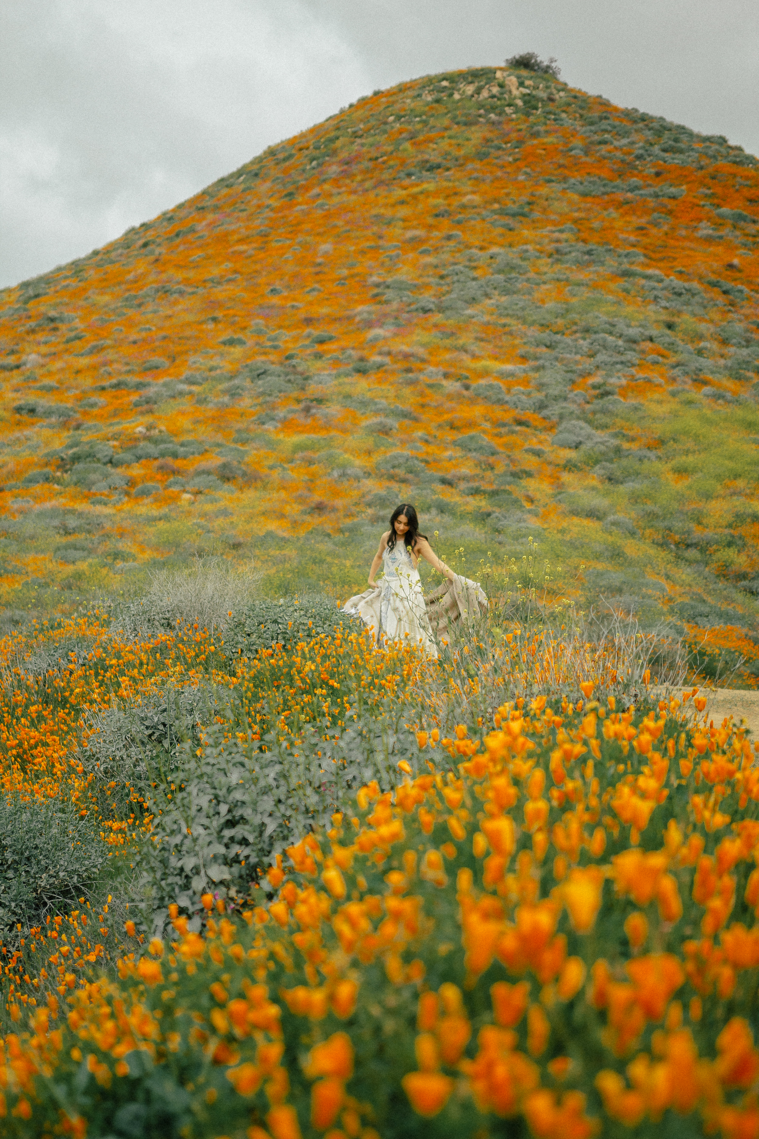poppy fields california superbloom 18