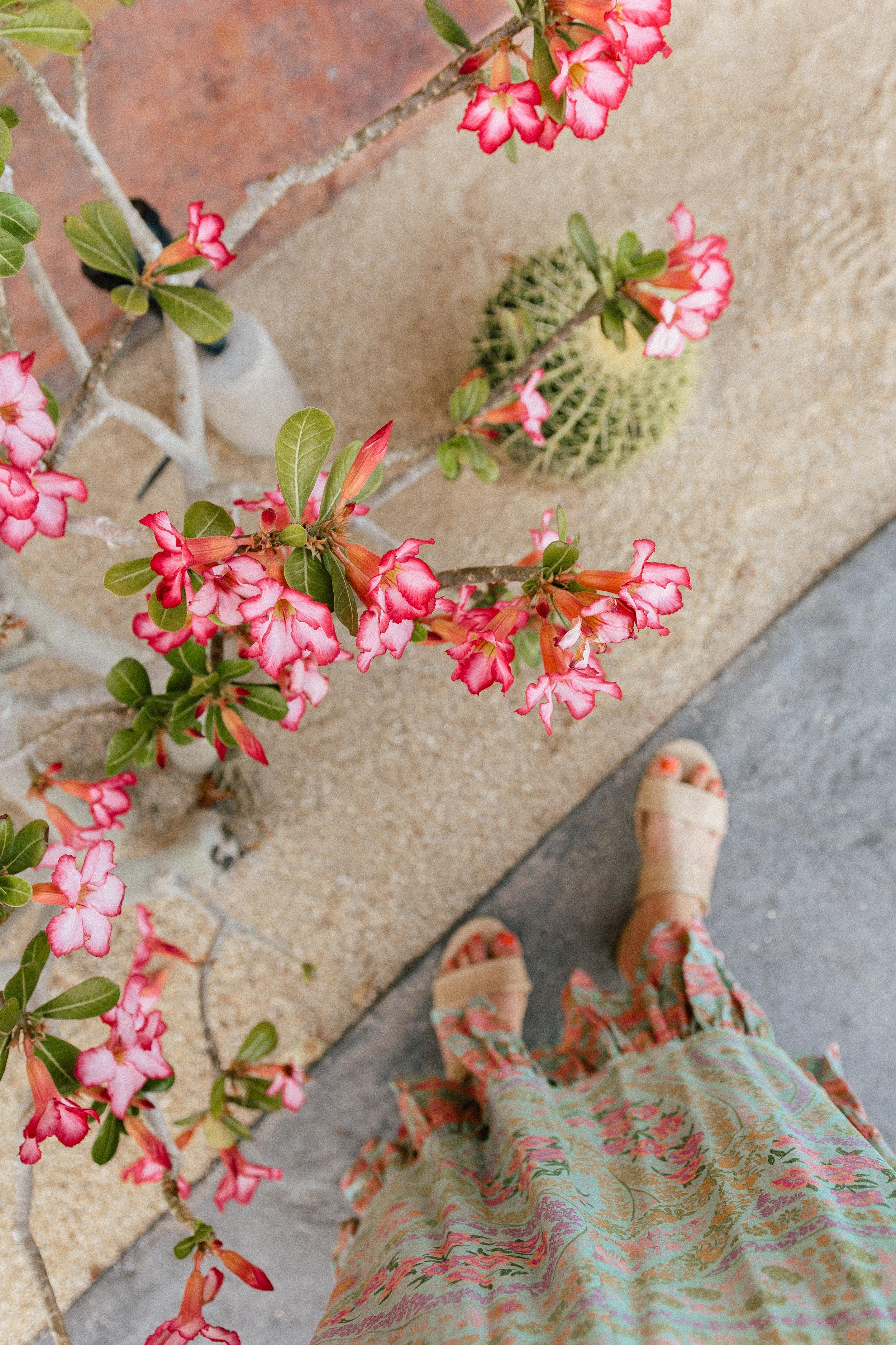Hacienda Encantada Los Cabos Resort 27