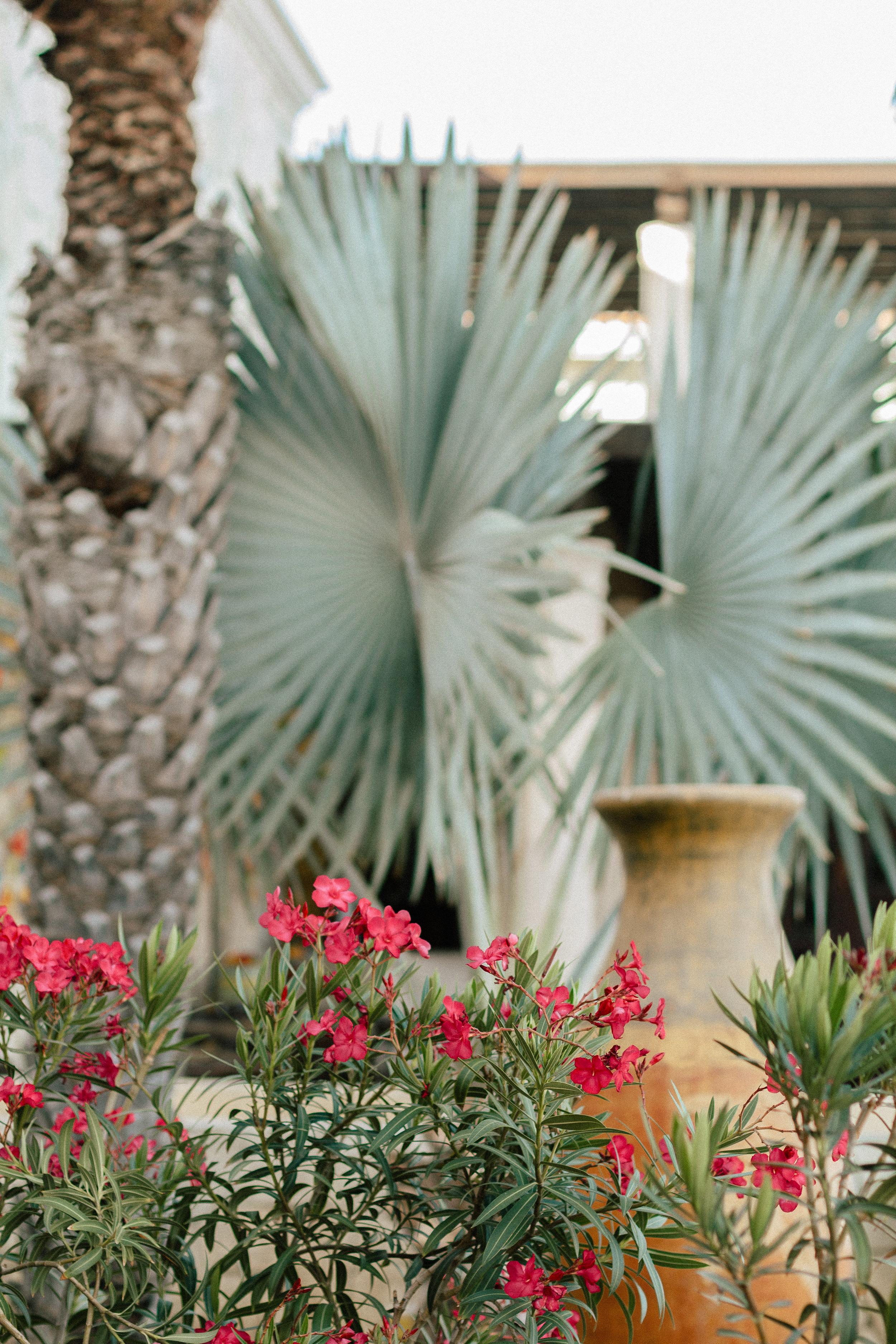 Hacienda Encantada Los Cabos Resort 29