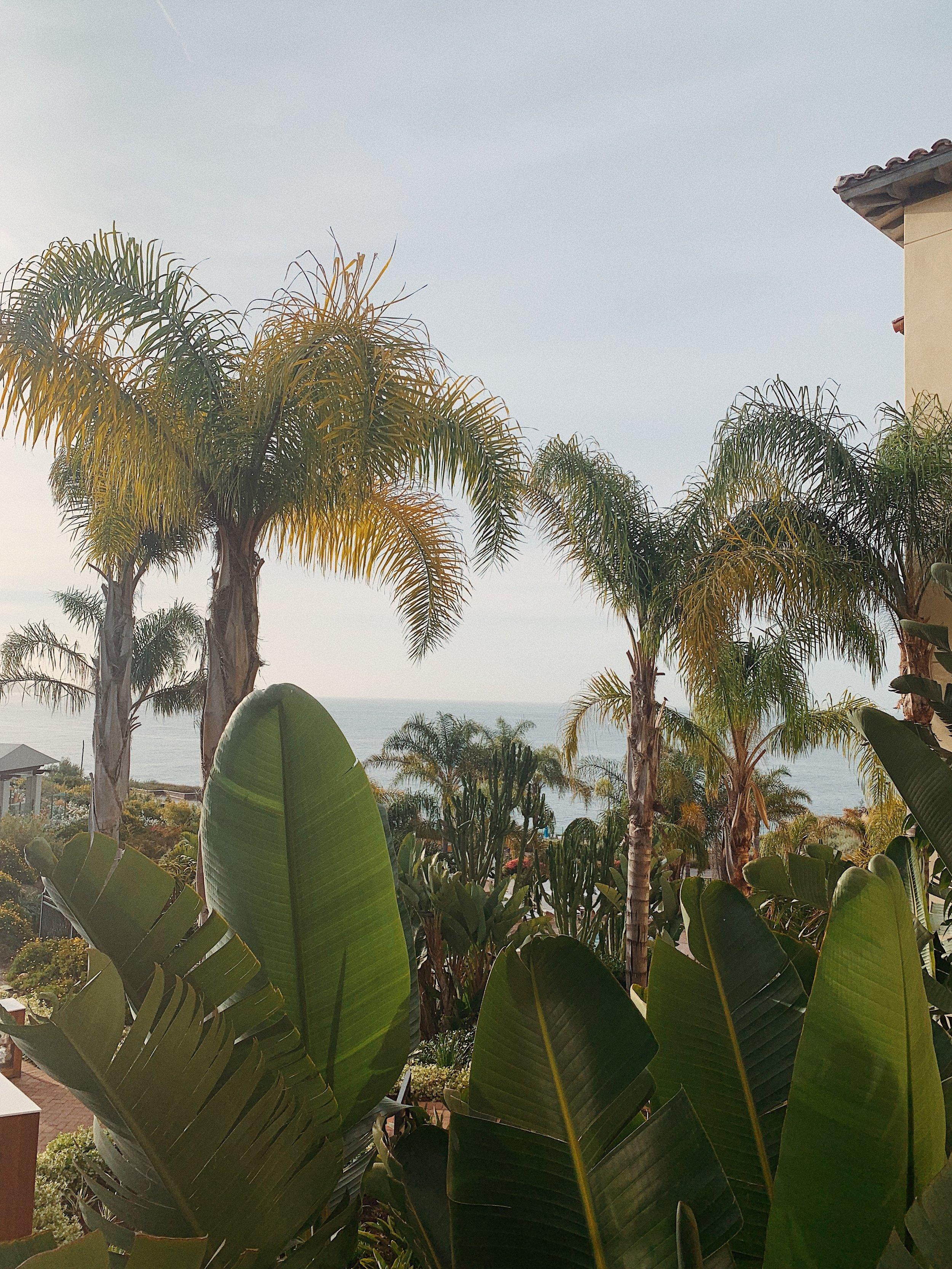 terranea resort room view