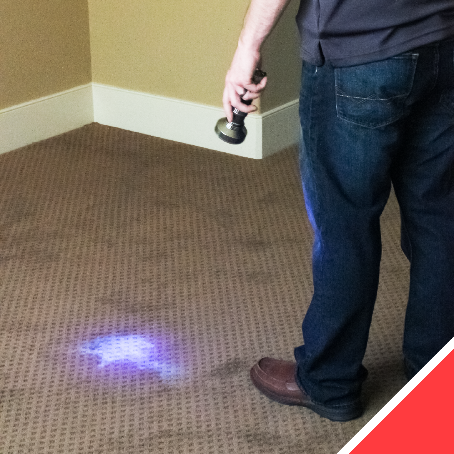 The UV Light helps us identify biological stains like urine, vomit, feces, and blood.