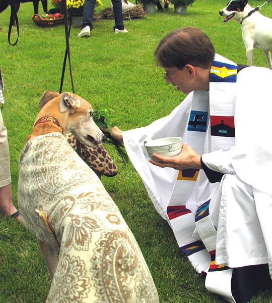 blessing-dogs.jpg