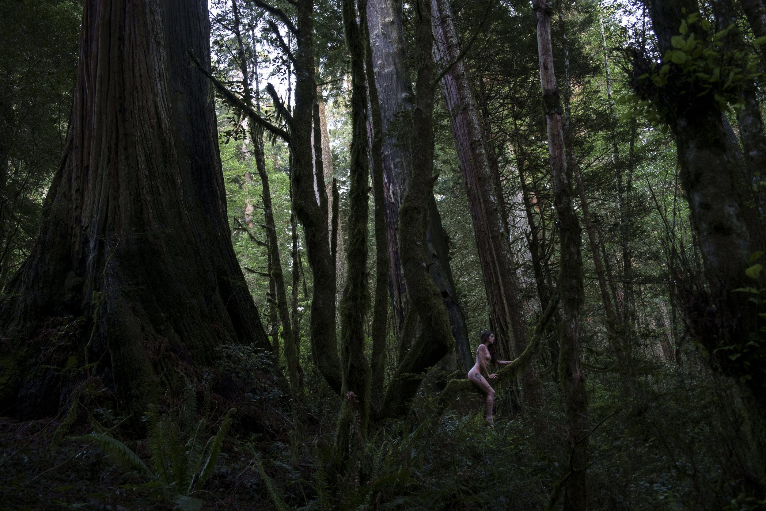 Redwoods National Park (2015)