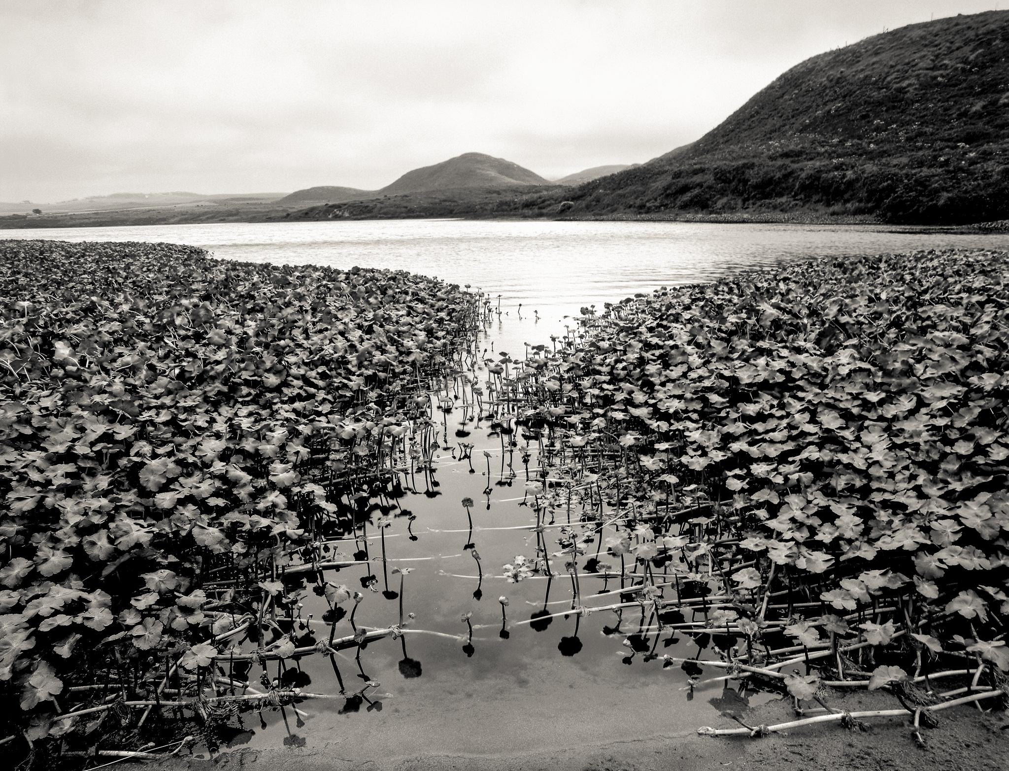 Abbott's Lagoon