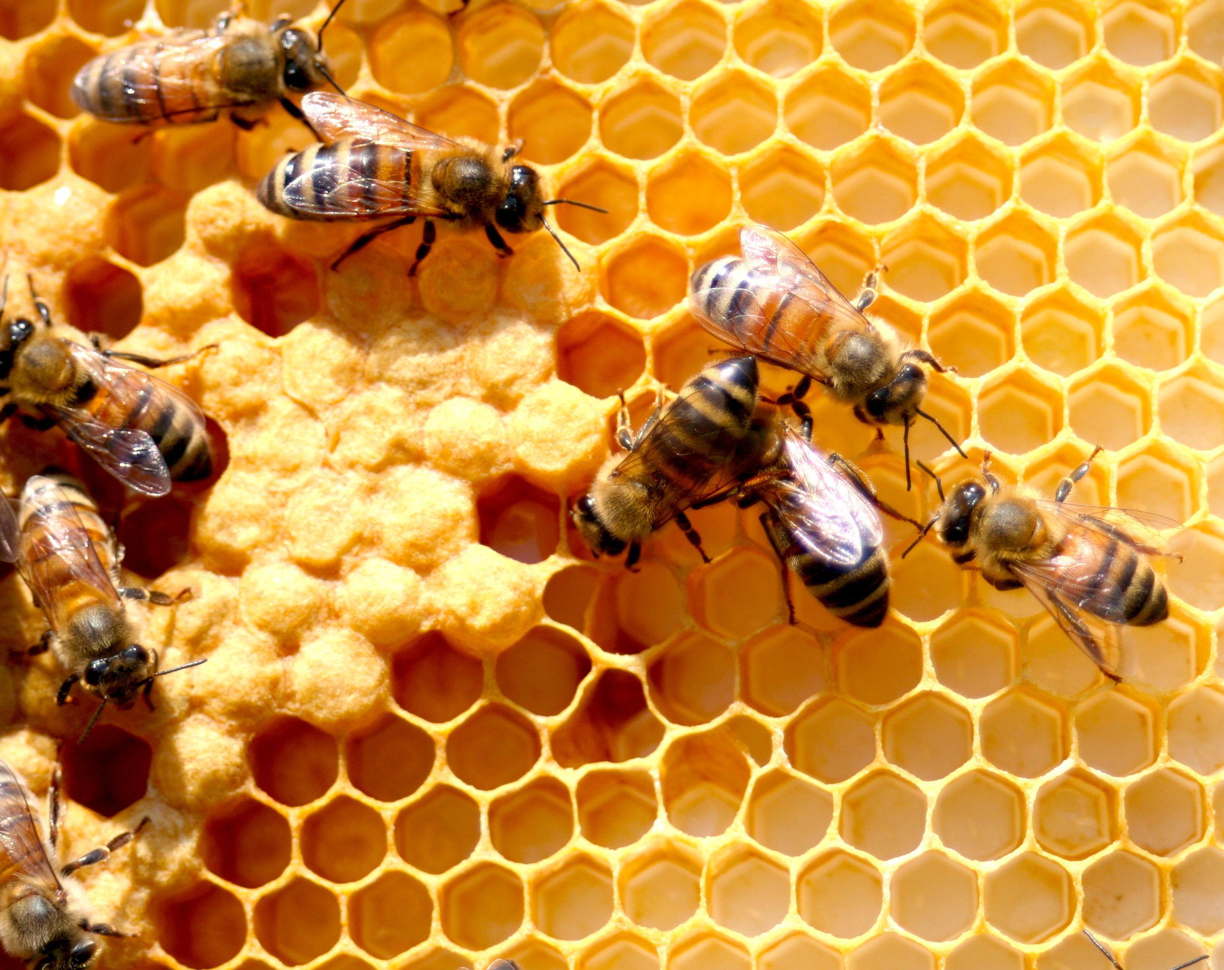 Bees_Photo by Jen Laskey.jpg