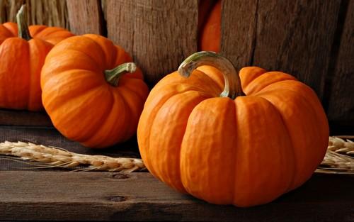 Pumpkins-autumn-35540961-500-313.jpg
