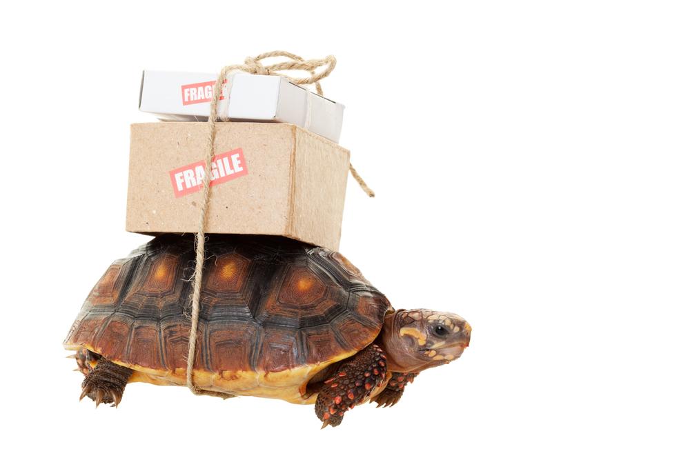 Slow shipping.jpg