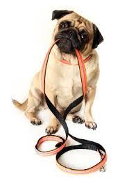 dog leash.jpeg