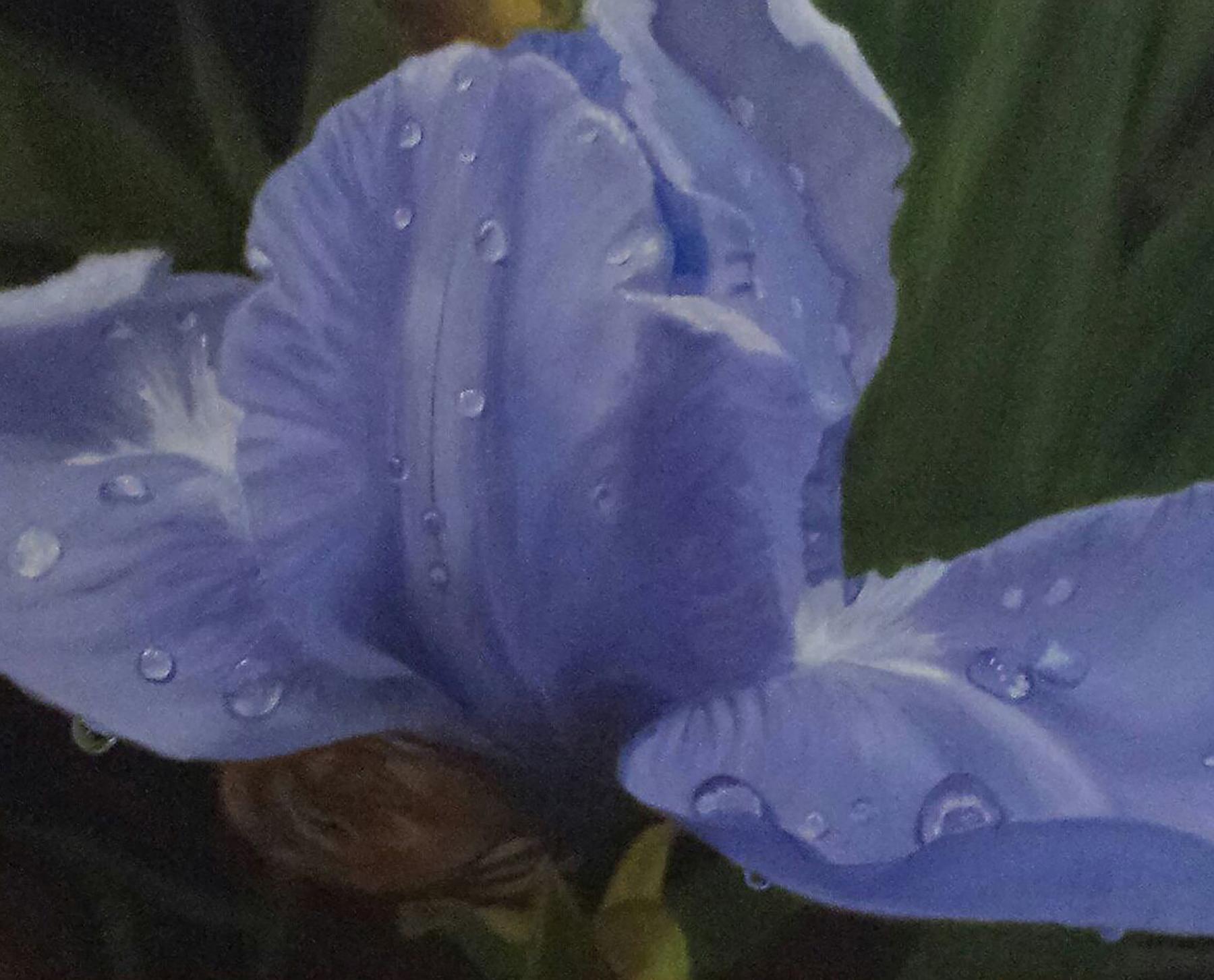 Iris Dew