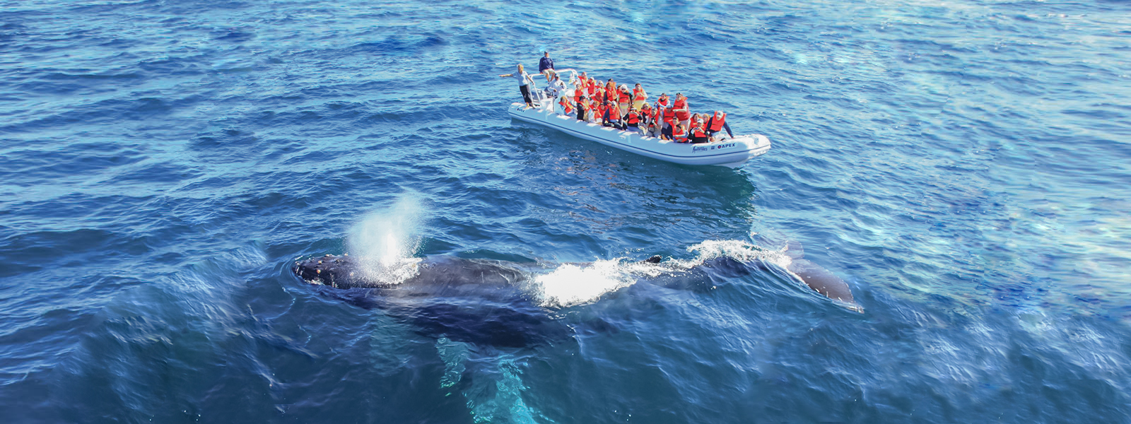 whale watching - from $89