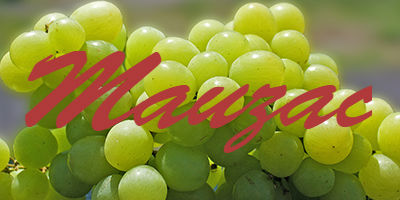 mauzac-grapes.jpg