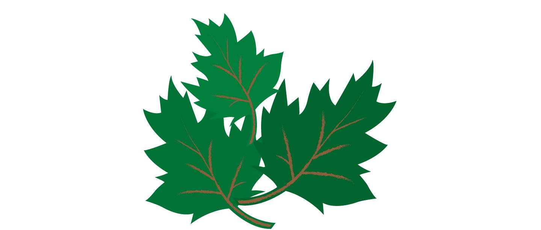Leaves_2.jpg