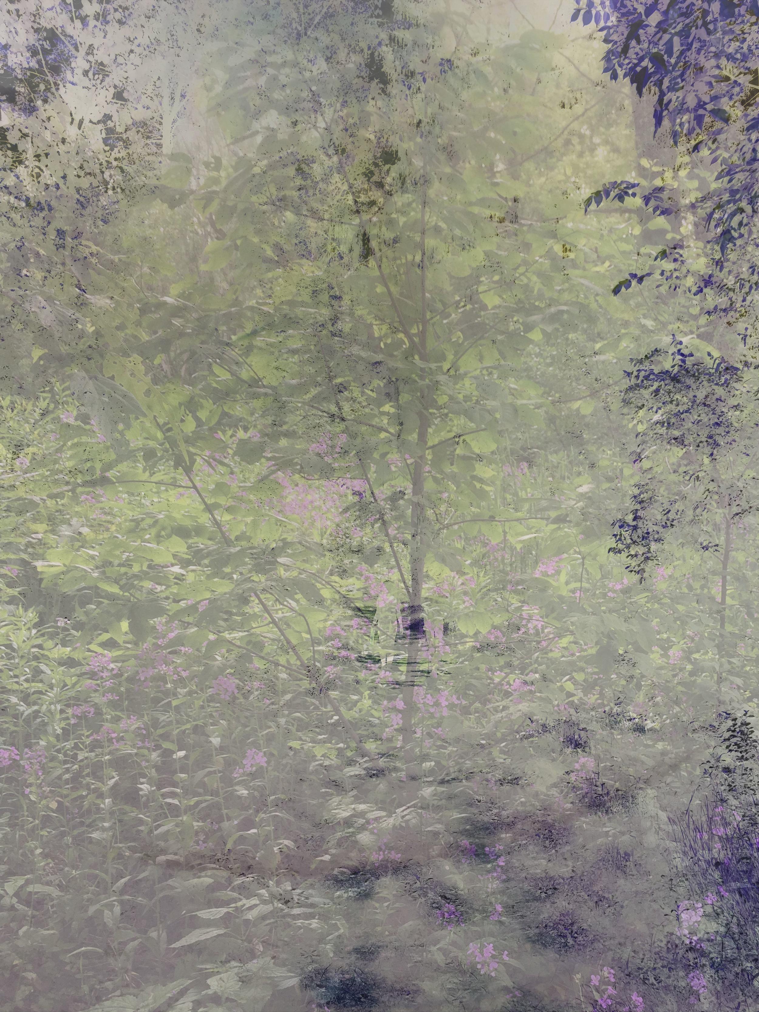 woods 3011.jpg