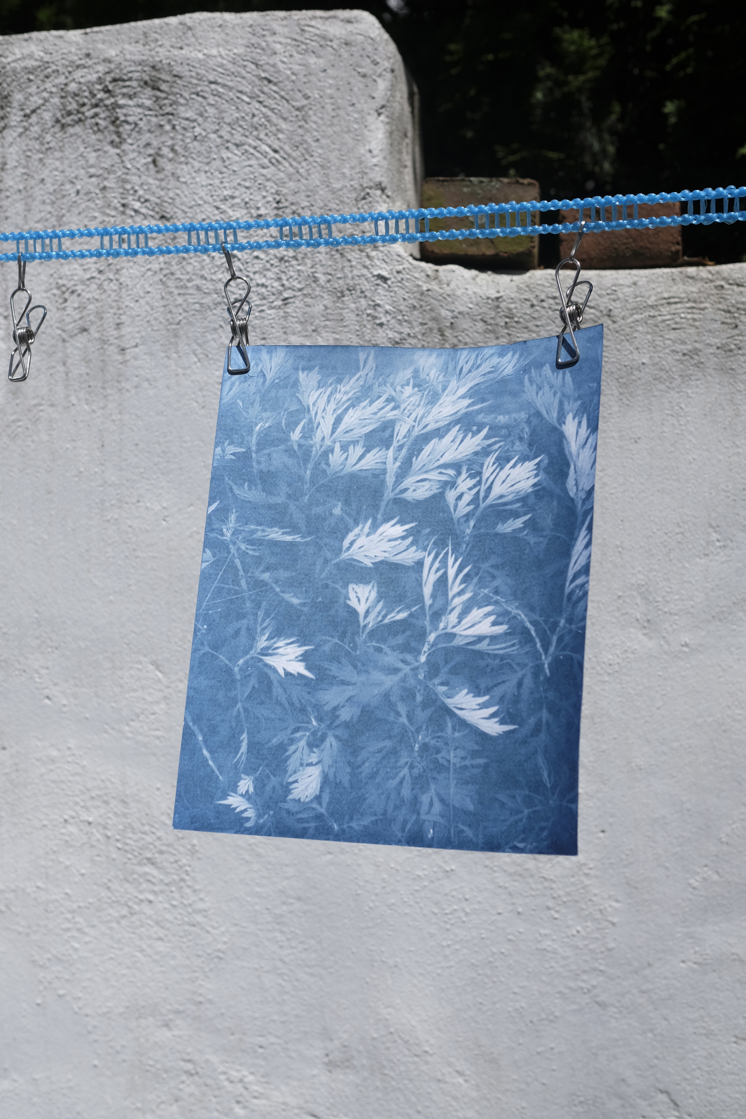 """If You Build It, They Will Come (In Progress) - If You Build It, They Will Come is a series of cyanotypes that explore the connectivity between humans and nature, and the ways in which they overlap within the built environment. This series focuses on """"weeds"""" in Philadelphia during a time of mass re-development – tracking their growth before, during, and after construction projects on """"vacant"""" land.If You Build It, They Will Come explores how these complex, valuable, and overlooked ecosystems define the spaces they occupy, and the way in which their story is mirrored in the resilience of people working with and against a changing city.*A cyanotype is an blue image that is created by exposing ferric ammonium citrate and potassium ferricyanide to the sun."""