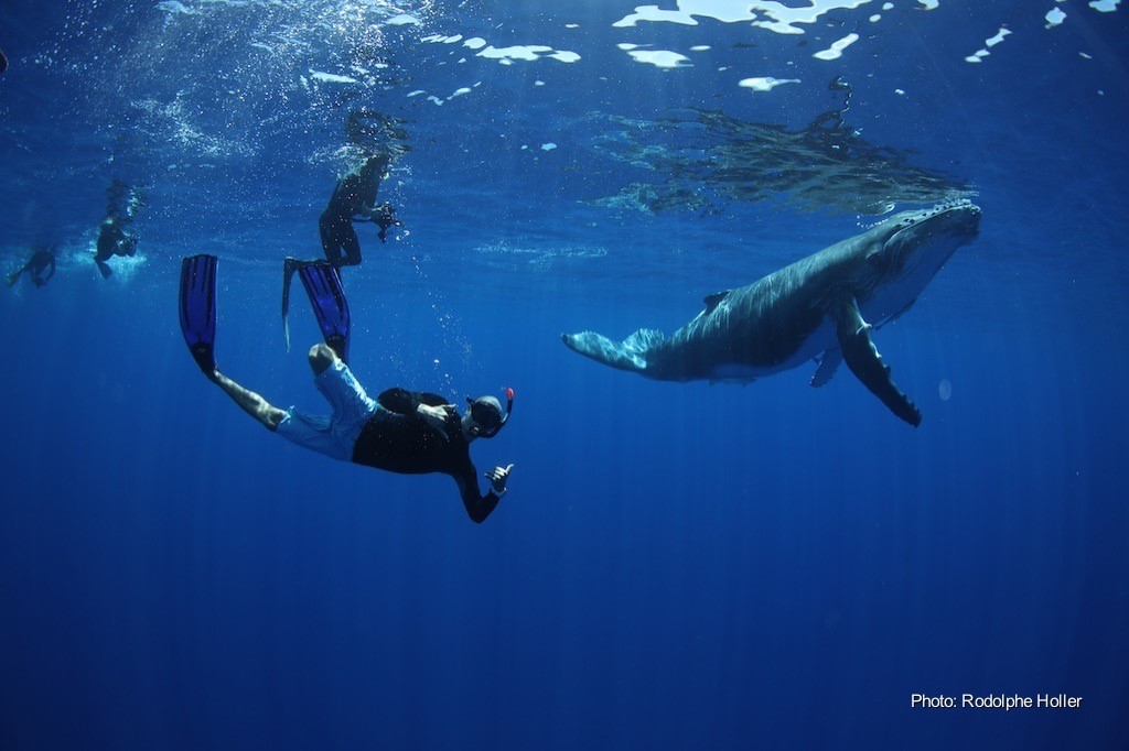 Whales in Tahiti