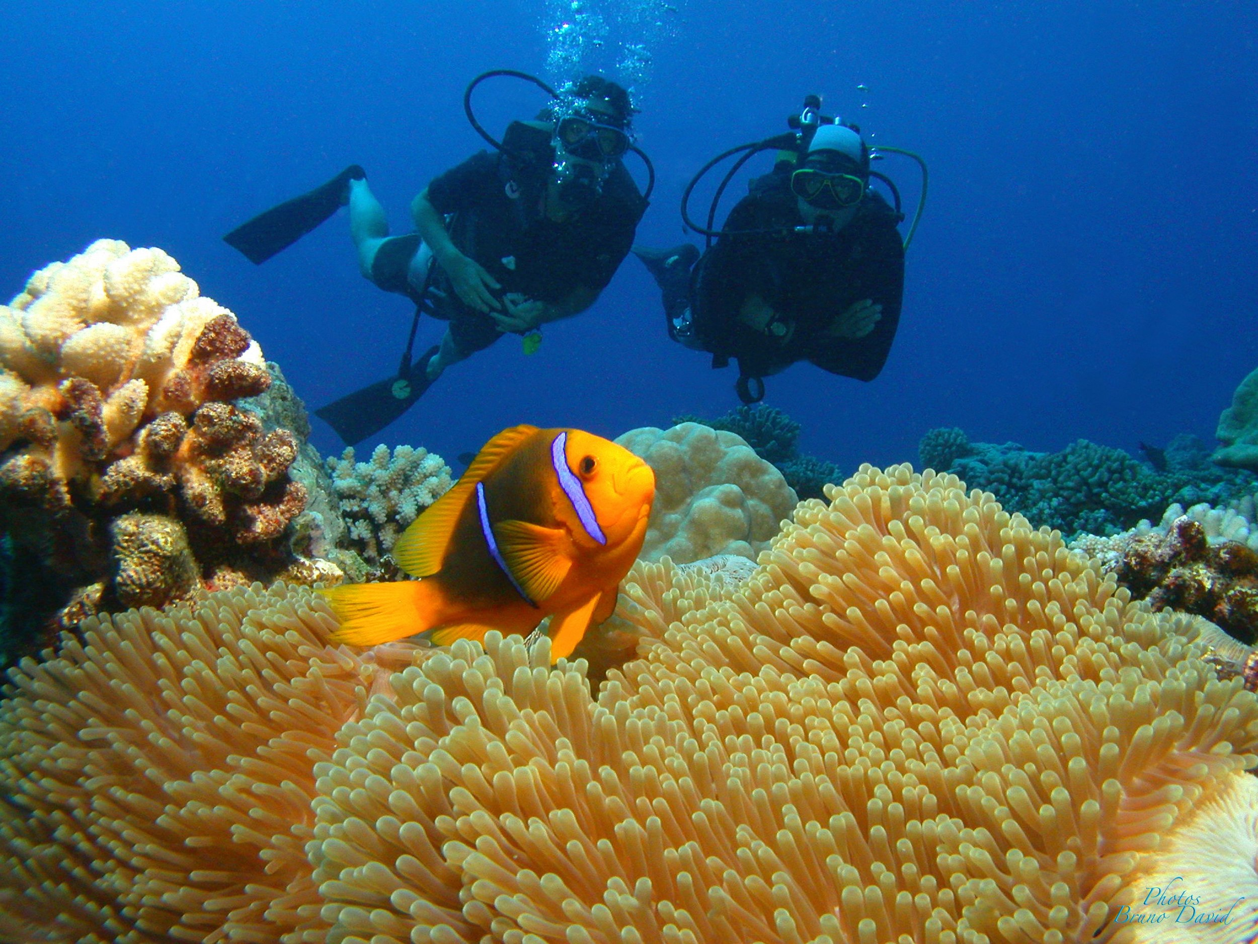 Experience diving with the amazing marine life of Tahiti