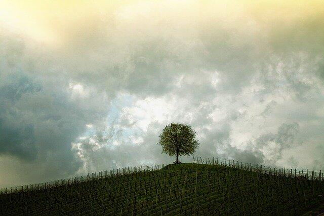 tree-207584_640.jpg