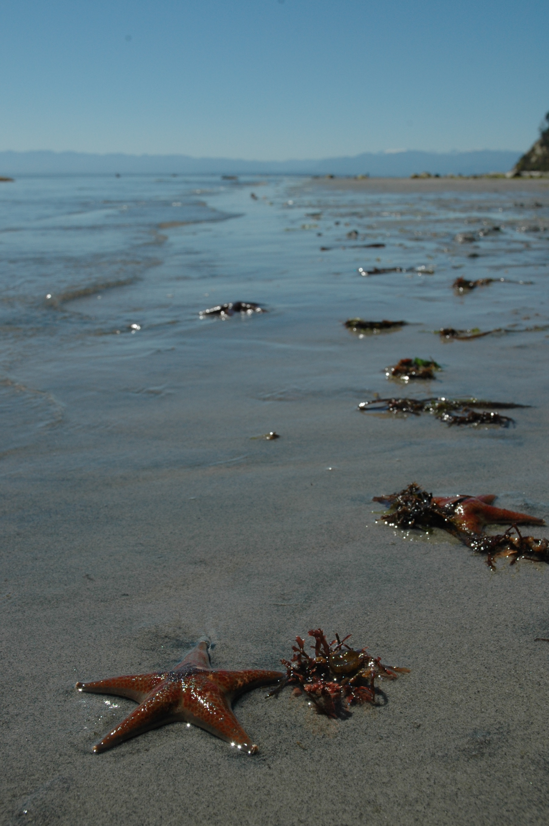 starfish on savary island south beach