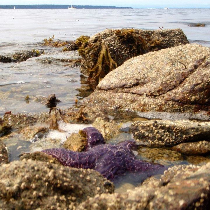 Starfish frequent the bay