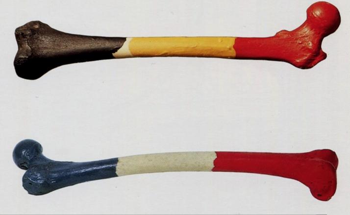 Marcel Broodthaers,  Fémur d'un homme belge  (1964-1965) et  Fémur d'une femme française  (1965)