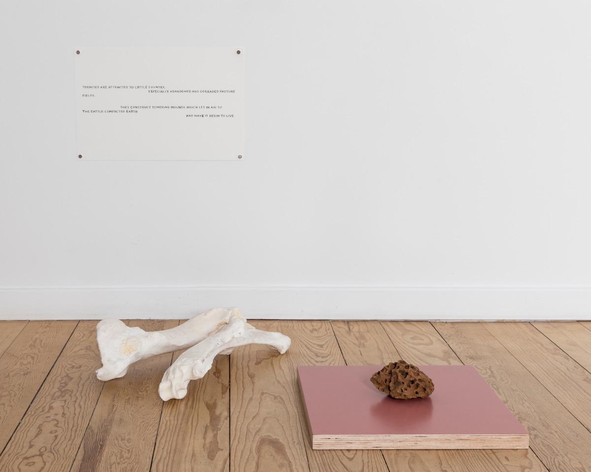 Maria Thereza Alves, The Flood, 2017