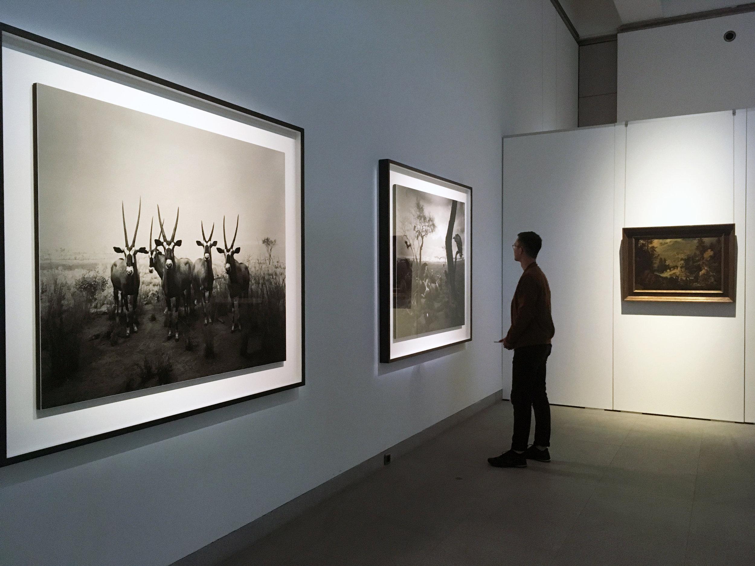 Hiroshi Sugimoto - Still Life , vue d'exposition, Musée royaux des Beaux-Arts de Belgique. Photo: Zoé Schreiber