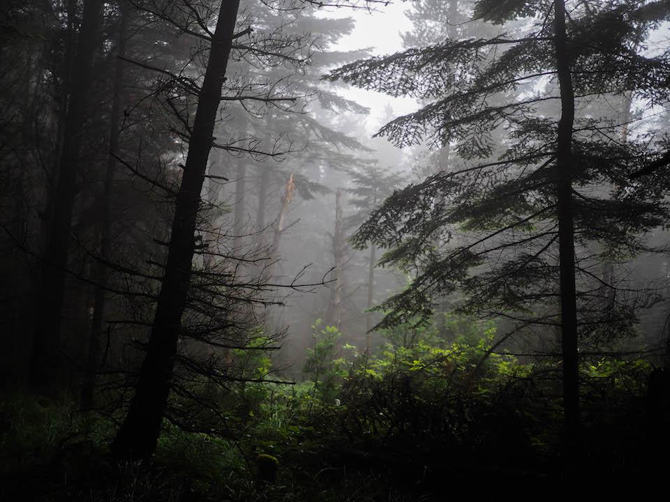 Mist in Annalong Woods