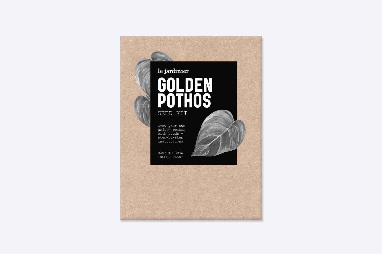 GoldenPothos.jpg
