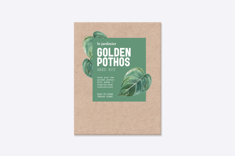 GoldenPothosColour.jpg