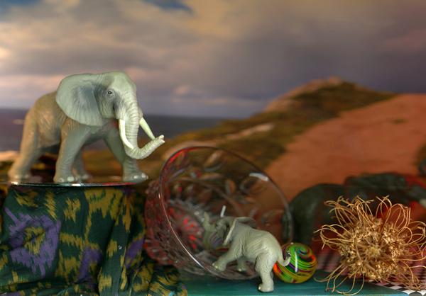 Still Life with Elephants