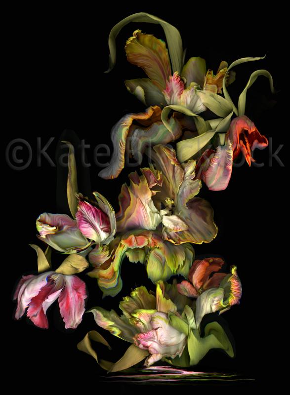 Tulip Formation