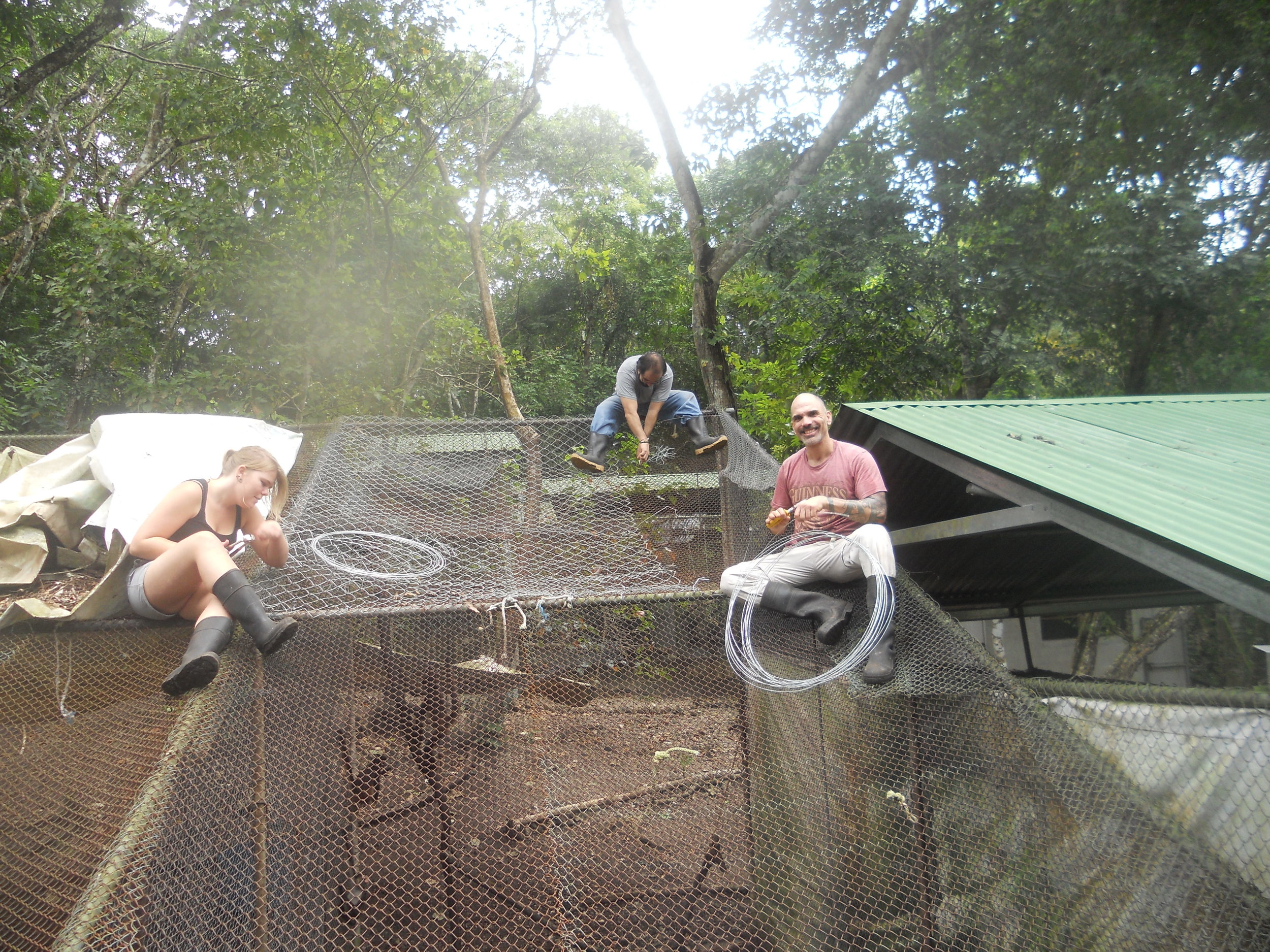 Volunteers working on a cage maintenance.