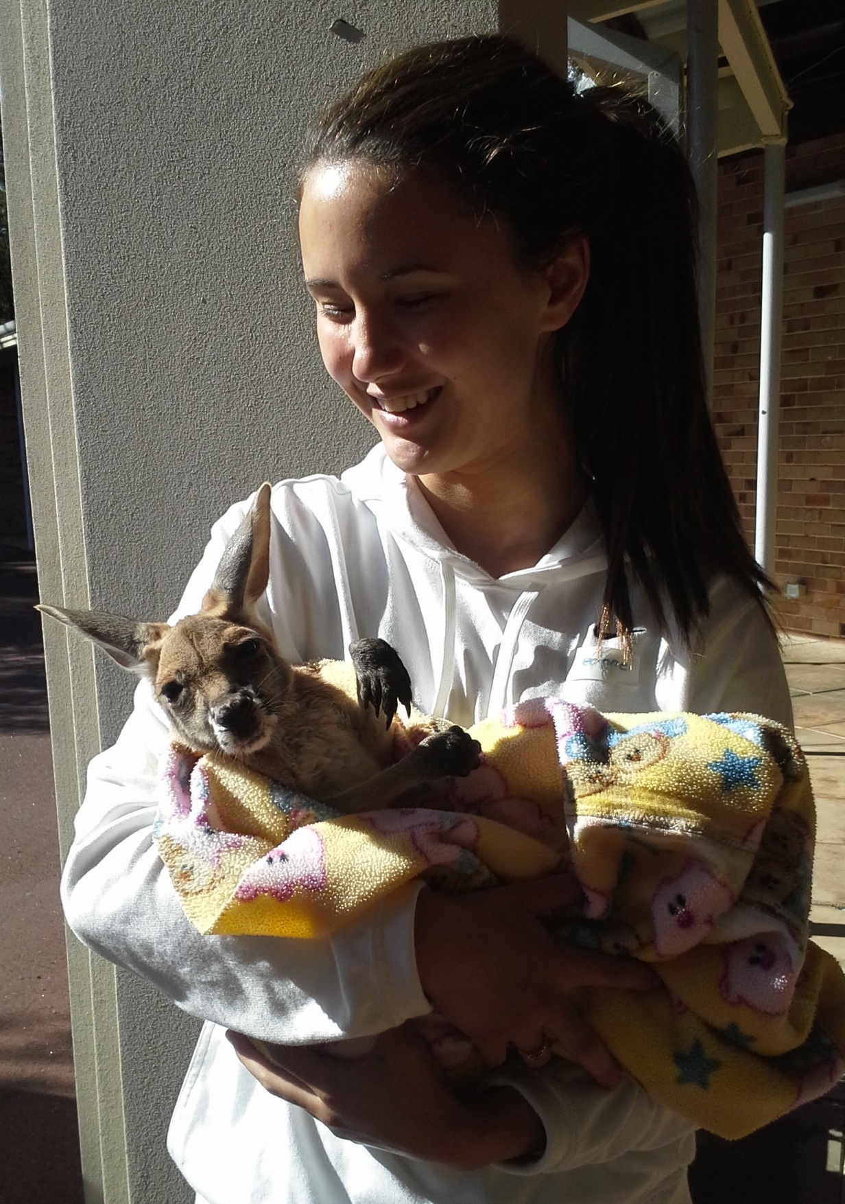 A volunteer holds an orphaned joey.