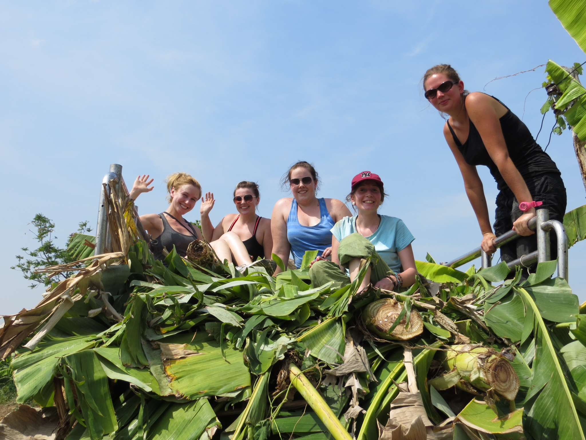 Our harvest group on top of the harvest truck filled with banana trees.jpeg
