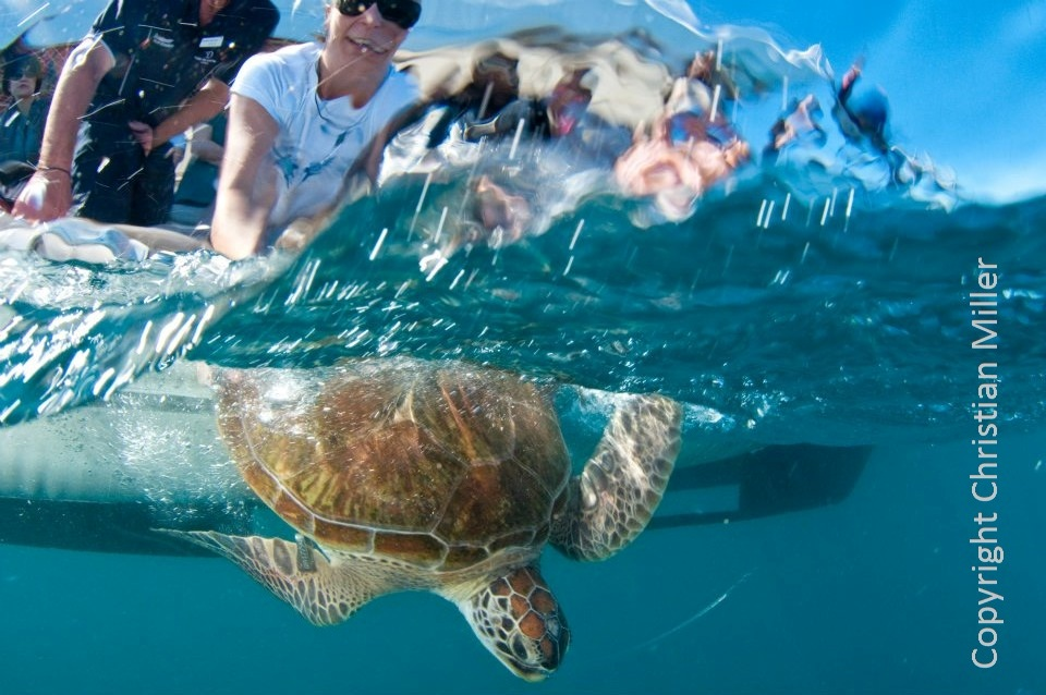 Roy the turtle release on sunlover copyright.jpg 4jpg.jpg