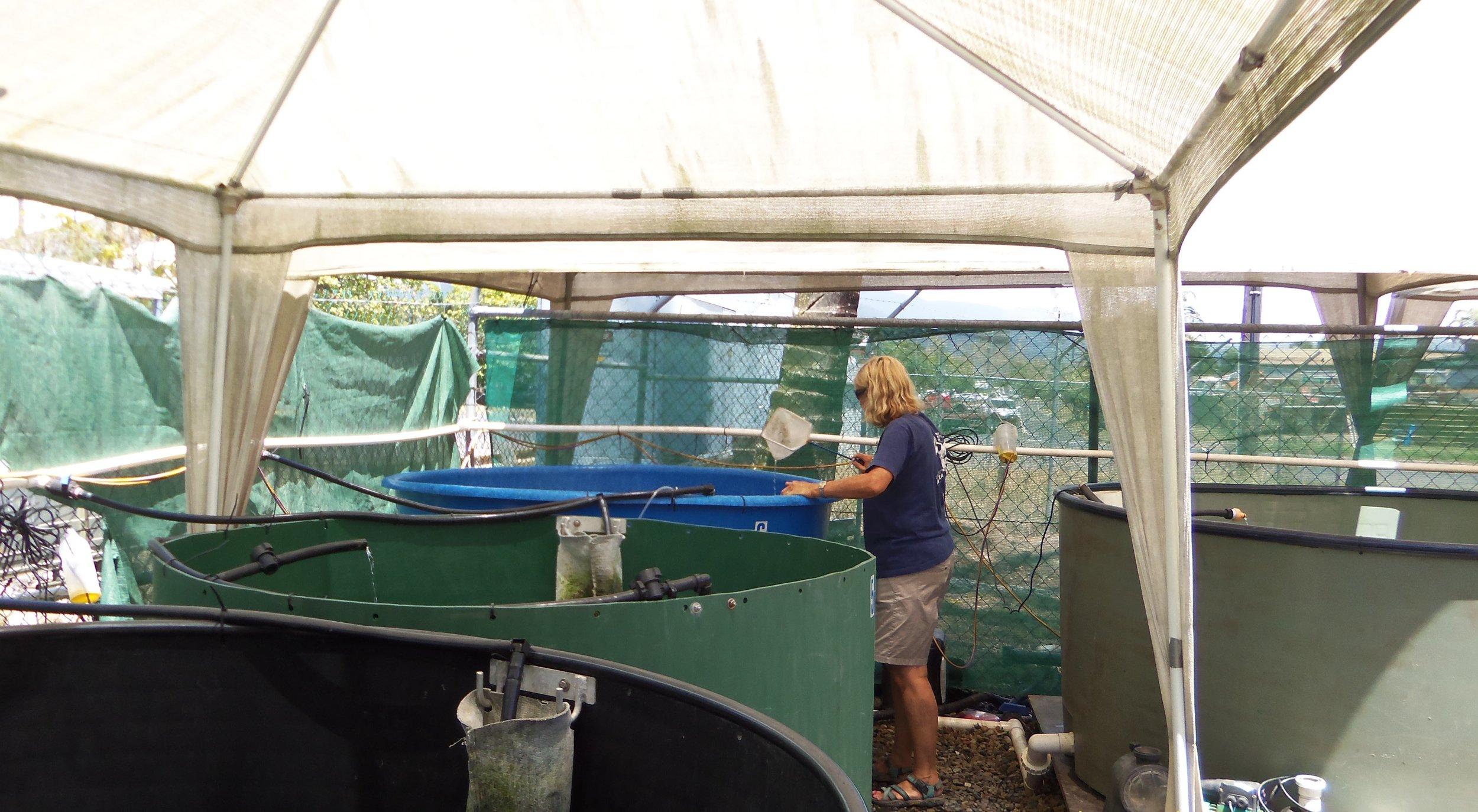 Sea Turtle Cairns 211.JPG