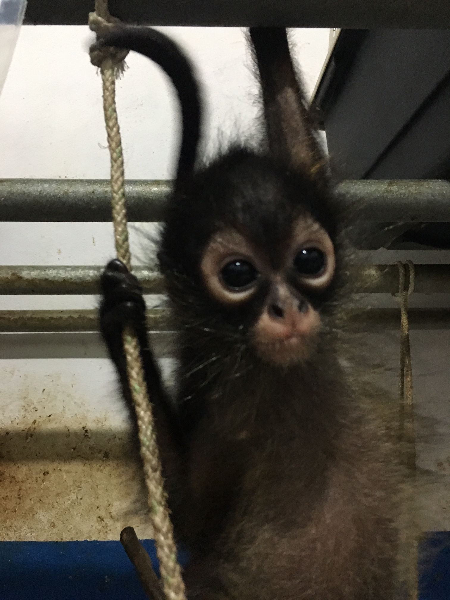 Orphaned monkey needs your help