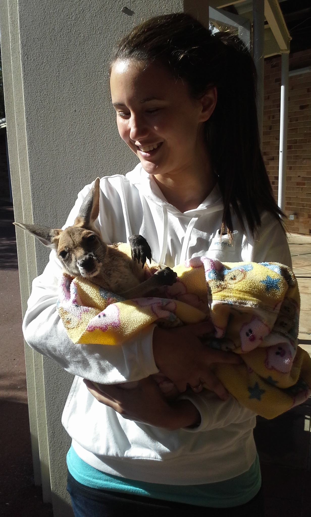 Orphaned joeys need volunteer attention.