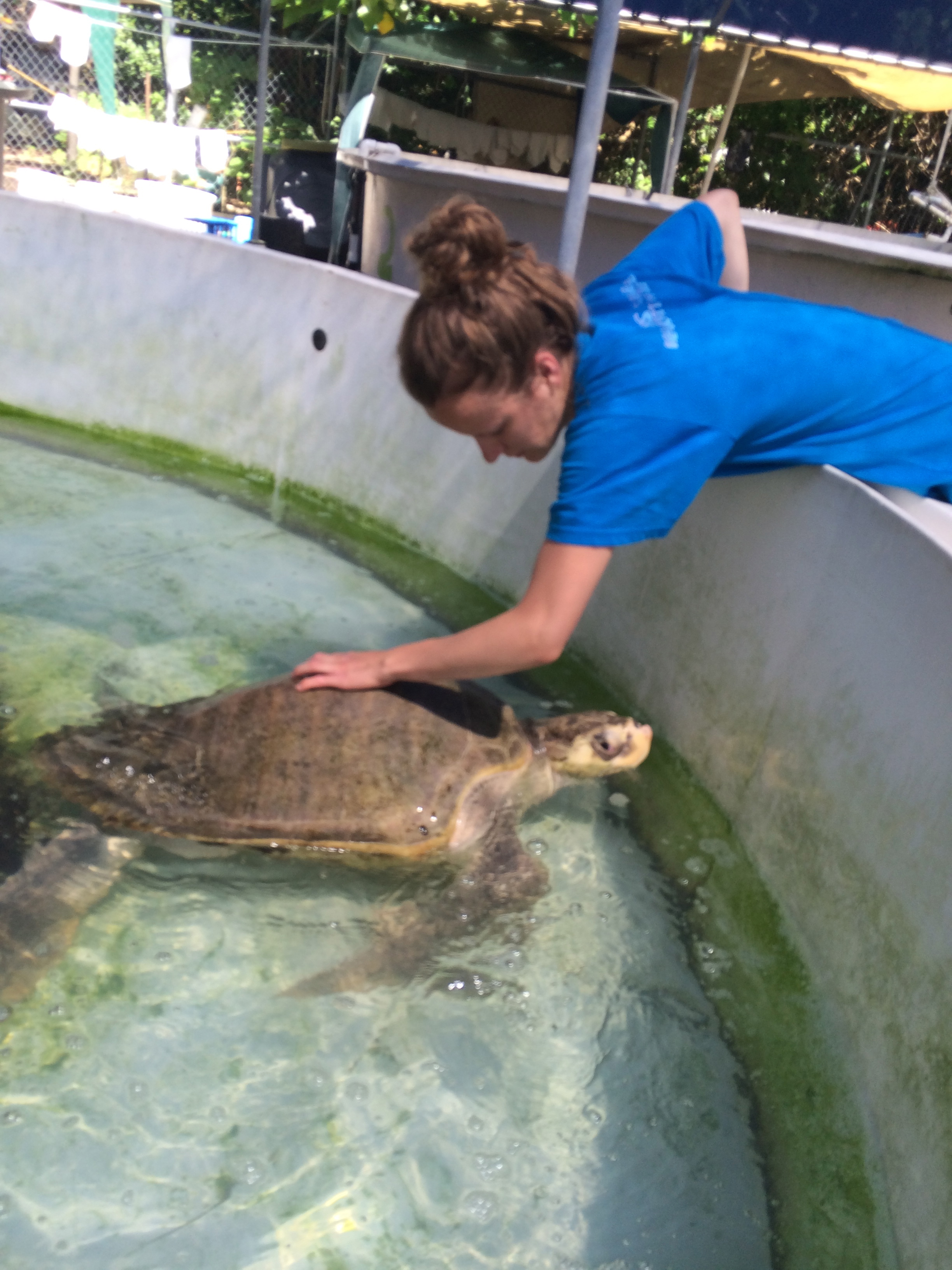 volunteers clean sea turtles