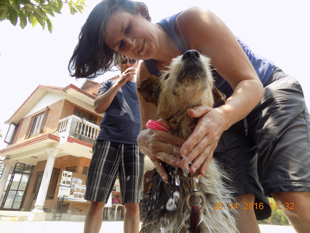 dog rescue in Nepal