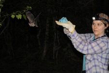 bat release