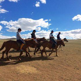 horse on mongolian steppe little.jpg