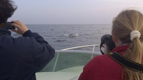 delfin fotkanje out.jpg